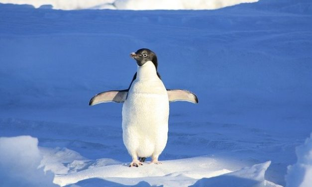 Penguin 4.0- What It Is & What It Means For Your Site